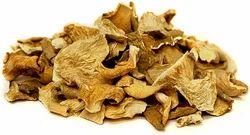 Dried Mushroom in Ranchi, ?????? ?????, ?????