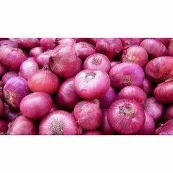 Onion in Bengaluru - Latest Price & Mandi Rates from Dealers in