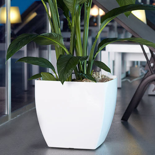 White Plastic Flower Pots Size 6 20 Inch Rs 5 Piece Onwards Id