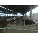 Cattle Cubicle