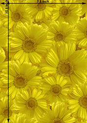 Sunflower Polyester Printed Films