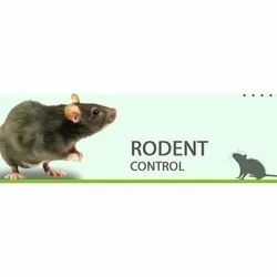 Chemical Treatment One Time Rodent Control Service, Ahmedabad, Gujarat