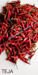 Stem and Stemless Red Indian Hot Teja Chilli