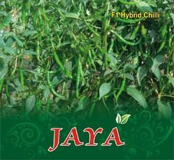 Jaya F-1 Hybrid Chilli Seed