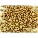 Dry Coriander Seed