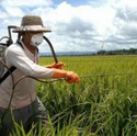 Agrochemicals And Pesticides