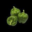 Rijkzwaan Green Pasarella Capsicum Seeds For Agriculture