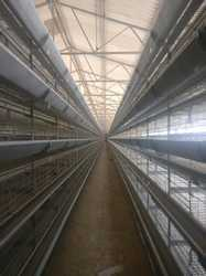 Zinc Plated Layer Battery Cage