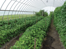 Greenhouse Farming Services In India