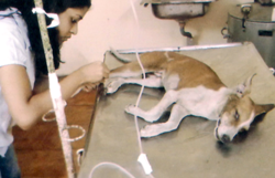 Dog Treatment Services