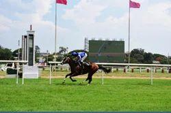 Basic Horse Riding Training
