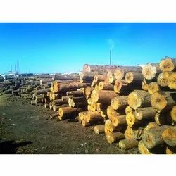 Natural New Zealand Pine Wood Logs