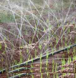 Spray Pipe Rain Hose