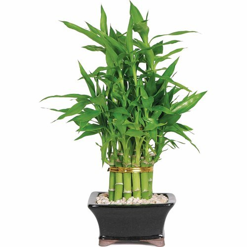 Bamboo Tree Decoration Home Decorating Ideas