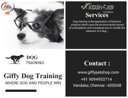 Training Service for Dogs in Chennai