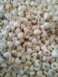 White Garlic, Packaging Size Available: 50 Kg, Garlic Size: 20-50 Mm