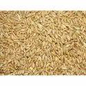 Dried Shankar Wheat Seeds, 12%, Packaging Size: 40kg