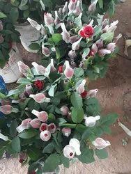 Dutch Rose Turnkey Project