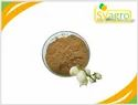 Yucca Extract