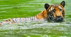 1 Night 2 Days Sundarban Tour Service