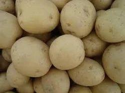Anuj Agri Farms Potato Vegetable Seed, Pack Size: 50 Kilograms