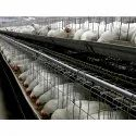 Steel Poultry Layer Cage