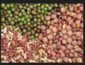 Fruits And Vegitable Seeds