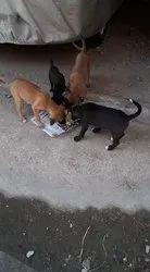 in jamsshedpur Veterinary Treatment, Free