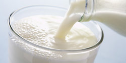 Murrah Buffalo Milk With High Milking Capacity, Usage: Restaurant, Home Purpose, Office Pantry