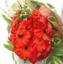 Daises Charm Flowers