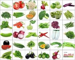 Early Green Hybrid Vegetable Seeds 35 Variety for Home Gardening