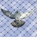 White Nylon Bird Net