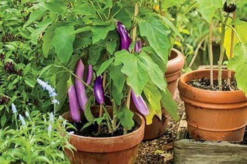 Green World Planters Wholesale Supplier Of Vegetable Garden Plant