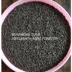 Sugandha Tulsi Seeds