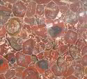 Petrified Wood Red Stones