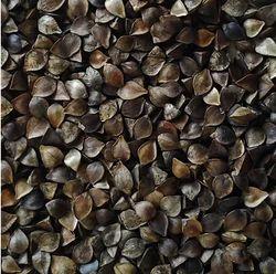Unhulled Certified Organic Buckwheat