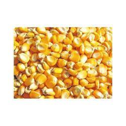 Broken Maize, Pack Size: 50 Kg