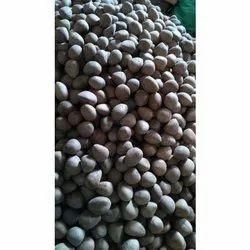 Dried Coconut in Pune, सूखा नारियल, पुणे