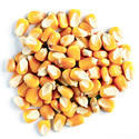 Griva Maize Seed, For Human