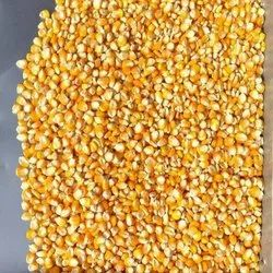Indian Yellow Corn, High in Protein, Packaging Type: Pp Bag