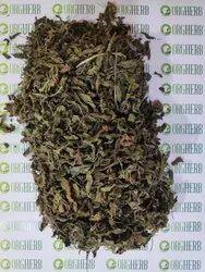 Ocimum Gratissimum Natural Rama Tulsi