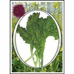 Dhruv Hybrid Gobi Saron Saag Seeds