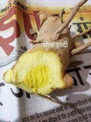 Sangli Turmeric Golden Yellow Sona haldi, For Cooking, Packaging Type: Loose Packing