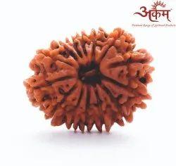 ARKAM Fourteen Mukhi Rudraksha Nepali
