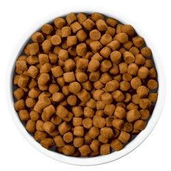 Large Feline Feed