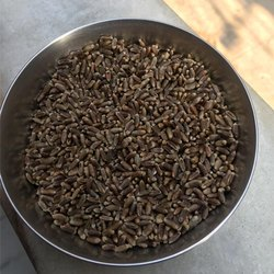Black Wheat Seed