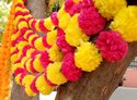 Dual Color Artificial Marigold Flower Garlands