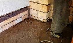 in Commercial Bee Timber Pest Management
