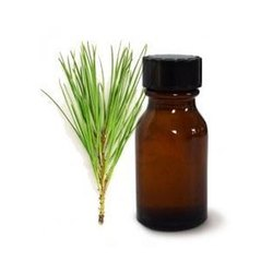 Pine Mugo Essential Oil