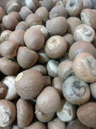 Wholesaler of Areca Nut & Betel Nuts by Mamta Supari Stores, Indore